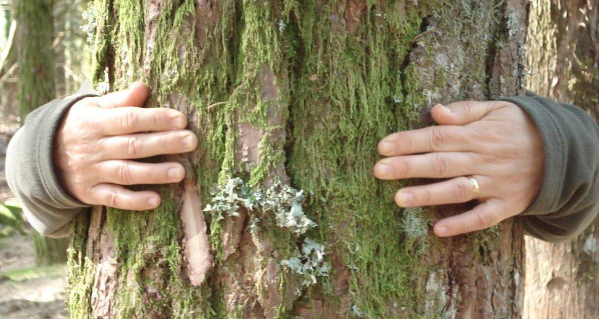 FOREST MINDFULNESS – El PODER DEL ABRAZO