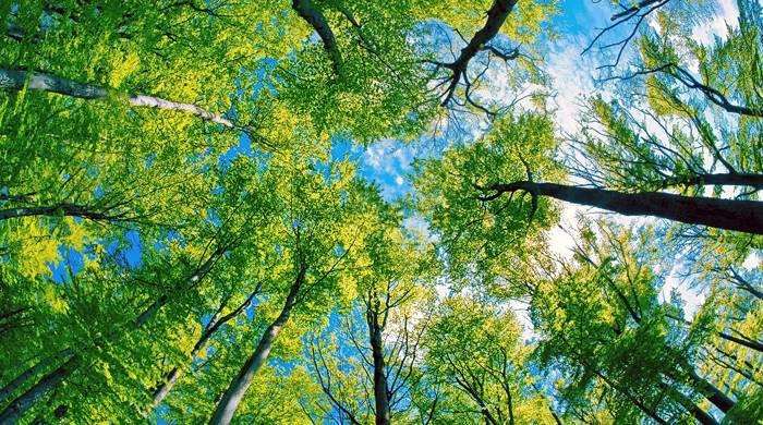 arbol-paisaje-de-arboles-y-cielo